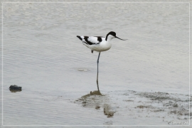 IMG_2691 (02-06-2012)