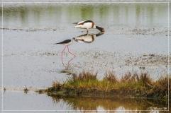 IMG_2726 (02-06-2012)