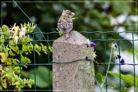 4L4A2238 (29-06-2019)_de_1200_web