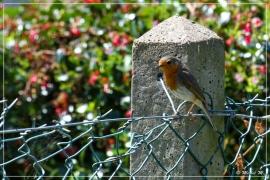IMG_2464 (28-05-2012)_deR_1200_web